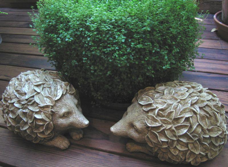 Hedgehogbabytears