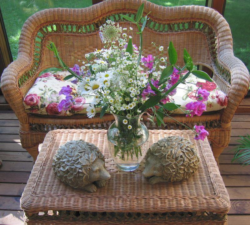 Sunroomhedgehogs1