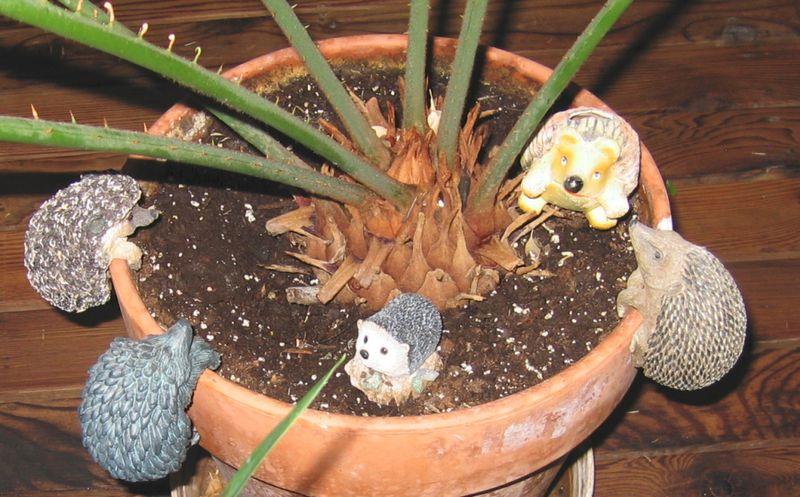Hedgehogpothangers1