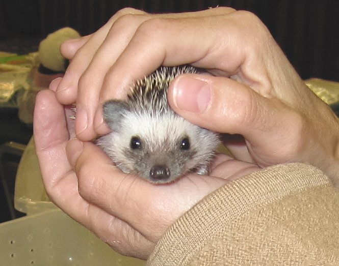 Hedgehogshowbaby