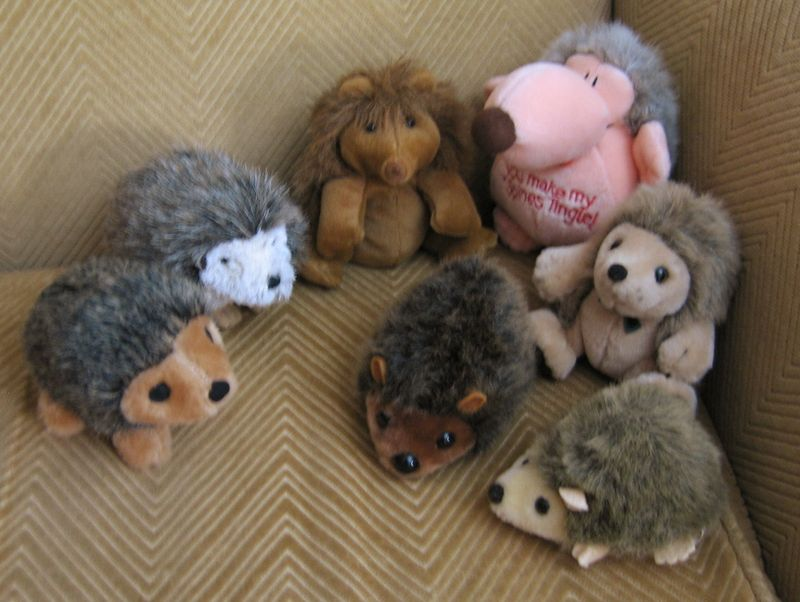 Funnyhedgehogs