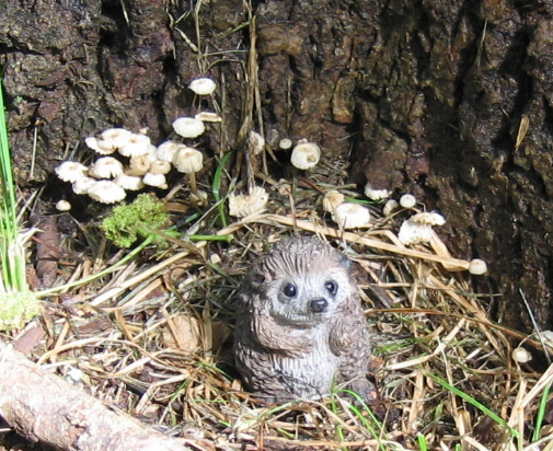 Tinyhedgehog2